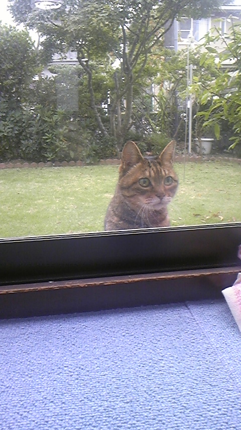 20年以上生きた猫のナナの面白写真