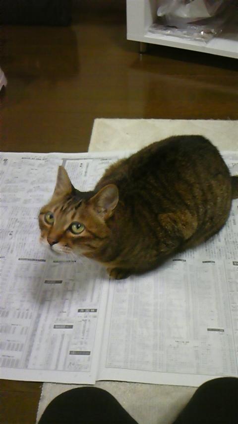 なぜ猫は新聞の上に乗るのか