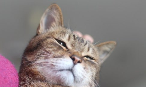 20年以上生きた猫のナナ