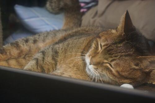 出窓が好きな猫